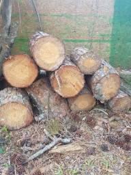 Doação de Corte de pinus!