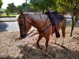 Vende-se ou troco cavalo QM registrado top ESCUTO PROPOSTA