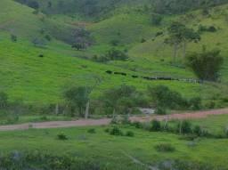 Arrendo , alugo fazenda de 60 alqueires em Padre Paraíso Mg