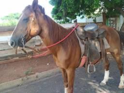 Cavalo Machador com sela 3000