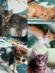 Gatinhos de 2 meses ( nós ajudem por favor)