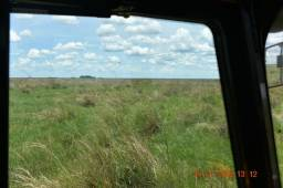 Fazenda na nhecolandia