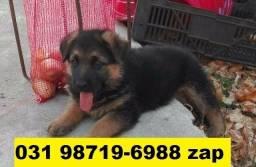 Canil Cães Premium Filhotes BH Pastor Dálmata Boxer Labrador Akita Golden Rottweiler