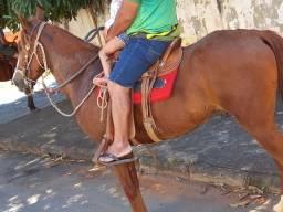 Cavalo manga larga marchador misturado muito bom