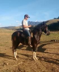 Vendo Cavalo MM
