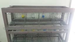 Temos gaiola gaiolas para Codorna e Coelho.