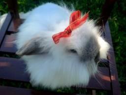 Vende-se mini coelhos