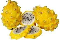 Título do anúncio: Mudas da rarissima pitaya amarela muito doce