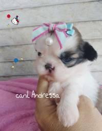 Canil Andressa