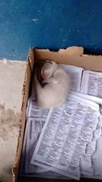 Gatinha filhote adoção
