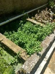 Plantas de Aquário a partir de 1,00