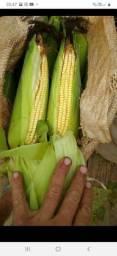 2 vagas para vendedor de milho porta porta
