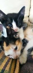 Doa se este dois gatinhos filhotes.