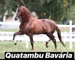 Cobertura Quatambu Bavária