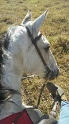 Cavalo campolino vendo ou troco