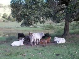 Vende essa fazenda no estado da Bahia