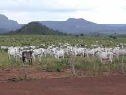Vendo fazenda em Recursolandia