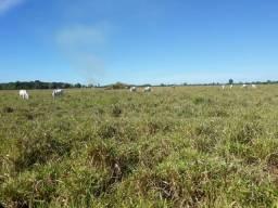Fazenda 2.967 há (613 alq) dupla aptidão no Vale do Araguaia