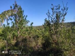 Vendo terreno com 6 tarefas na zona rural do conde