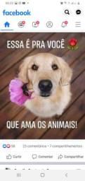 Quero comprar uma Beagle