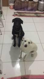 Cachorro e cachorra