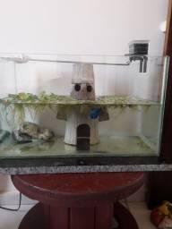 Casinha artesanal lula molusco