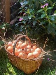 Ovos Caipiras direto da roça