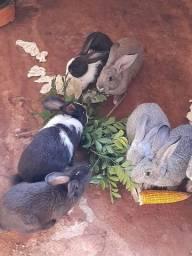 Vendo coelho ótimo para crianças