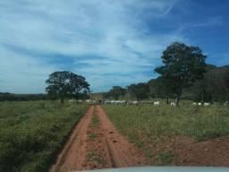 Fazenda a venda em Goias Fazenda Plana 12.000 Hectares