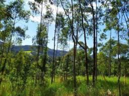 Sítio 2 hectares escriturados