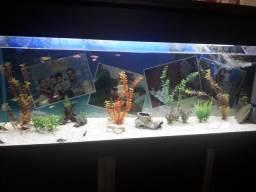 Aquario completo 300lt