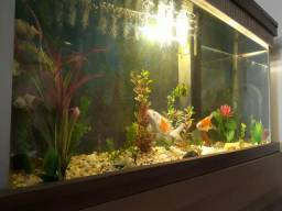 Vendo aquario 20o lts completo