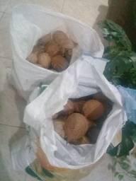 Vende-se 223 coco secos