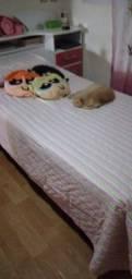 Cruzamento Gato