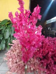 flores desidratada