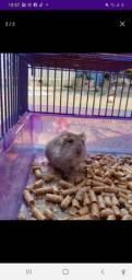 Vendo hamster anao russo