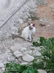 (Gata) branco filhote
