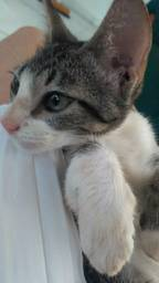 Doação de 2 gatinhas Leia a descrição!!