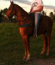 Cavalo Mestiço (MM)