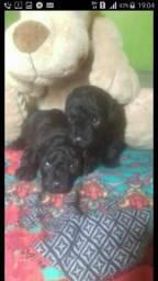 Lindos Poodles Toy