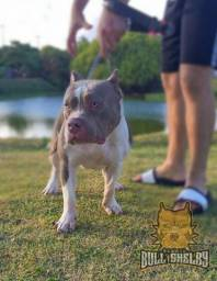 Cobertura American Bully - Pitbull , Pit monster