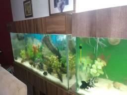 Vendo 02 aquarios