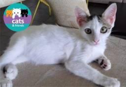 Lindo gatinho filhote para adoção