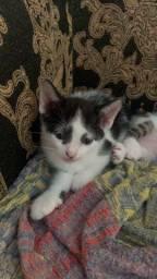 Doa-se 3 gatinhos / gatos filhote lindos (Facilito entrega)