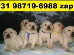 Canil em BH Filhotes Cães Labrador Dálmata Pastor Rottweiler Akita Boxer