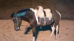 Vende- se cavalo.vai no laço