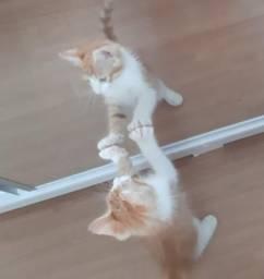 Doando gato macho