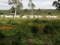 Fazenda de 1.940 hectares no Manso a 45 km de Cuiabá MT