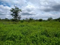 Oferta de Fazenda de Eucalipto no município de Piracuruca. Referência: FZ794V