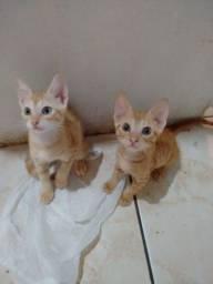 Gatos para adoão